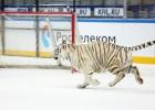 Video: Lai uzvarētu, dažbrīd KHL tiek izmantoti arī ne tie godīgākie paņēmieni