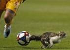 Video: Kompensācijas laikā spēlē iesaistās kaķis