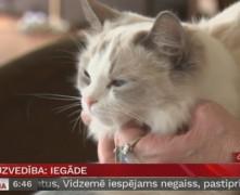 Video: Kaķa iegāde. Kas jāzina par tā uzvedību?