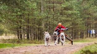 Mēnesis līdz Pasaules kausa posmam kamanu suņu sportā