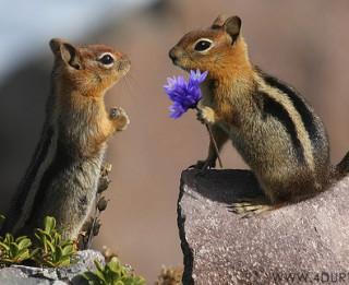 Tā mīl dzīvnieki. Putnu un zvēru intīmā dzīve