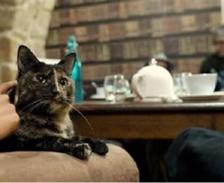 Drīzumā Rīgā durvis vērs pirmā kaķu kafejnīca