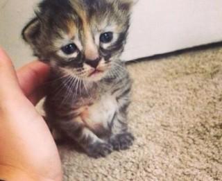 Ņūorleānā dzīvo kaķēns, kas vienmēr ir bēdīgs
