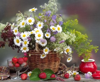 Sievu zāles - ārstniecības augi, kas palīdz grūtniecībai