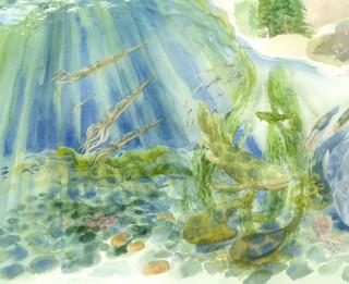 """Dabas muzejā atklāta izstāde """"Latvijas dabas bagātības. No koraļļa līdz virpainītei"""""""