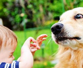Speciālisti skaidro, kā atpazīt suņa ķermeņa valodu