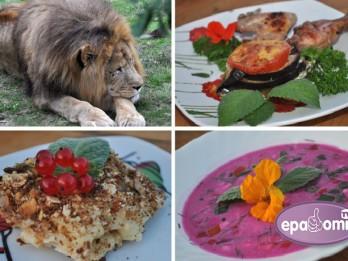 Video: Astroloģiskā virtuve: Ko likt galdā Lauvai?