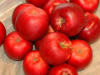 Dabas muzejā notiks tradicionālā ābolu izstāde
