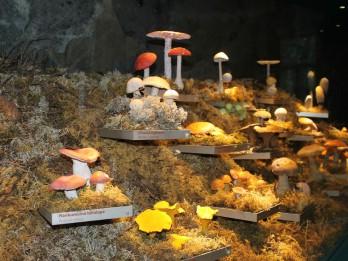 Dabas muzejā atklāta jauna pastāvīgā ekspozīcija par Latvijas augiem un sēnēm