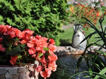 Video: Kas īpašs Vēžu dārzā. Astroloģiskie dārzi