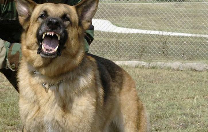 Suņi sakož gan saimniekus, gan svešiniekus. 9 padomi saskarsmē ar suņiem