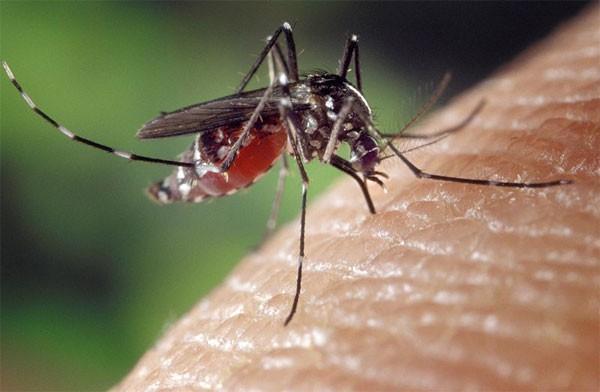 Cīņa pret odiem un kodumu niezi. Ko izvēlēties?