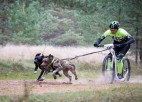 Piecu valstu pārstāvji startēs Pasaules kausa posmā kamanu suņu sportā Carnikavā