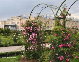 Foto: Rundāles pils dārza rozes 32 fotogrāfijās