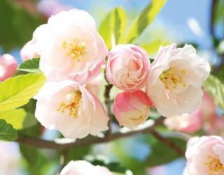 Vārdu skaidrojums. 1.maijs – Ziedonis