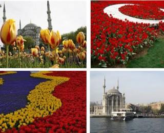 Tulpju festivāls Stambulā-  skaistums, kas jāredz katram