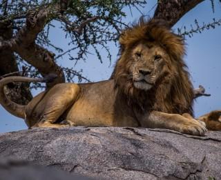 Septiņi iemesli, kāpēc doties ceļojumā uz cilvēces šūpuli Tanzāniju