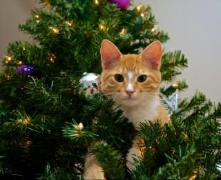 Joki par Ziemassvētkiem un Jaunā gada sagaidīšanu