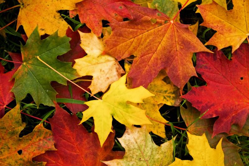 Krāsaino rudens lapu maģija